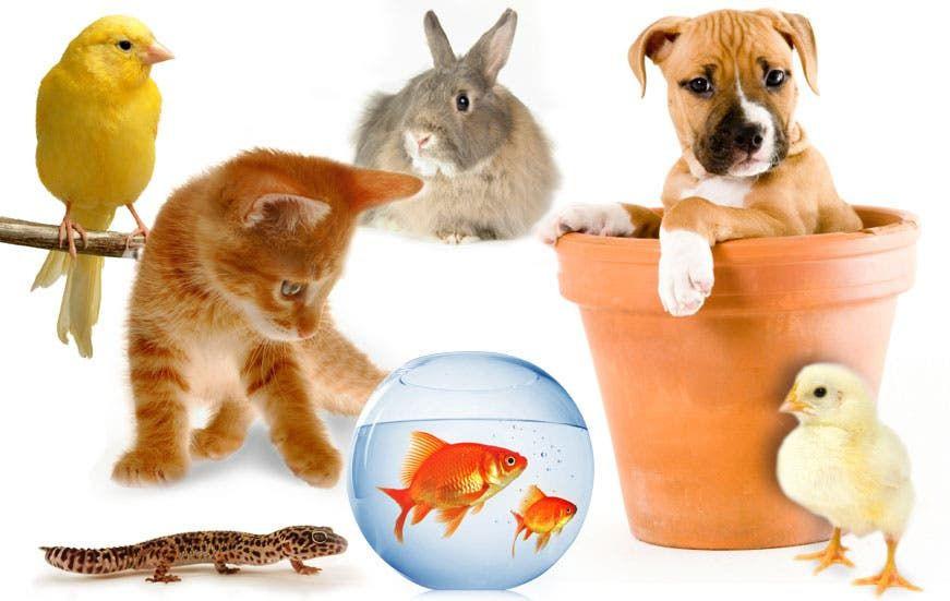 حیوانات خانگی و کرونا: آیا باید نگران انتقال از حیوانات خانگی باشیم؟
